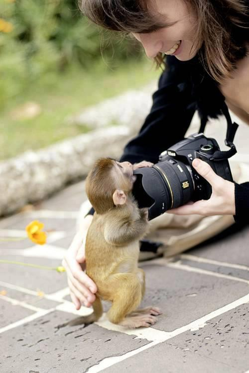 Caption Contest: Monkey And CameraEnter in your best caption in the comments below on the full post.