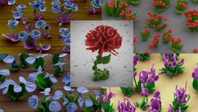 mothernaturenetwork:  Crystal 'flowers' bloom in Harvard nanotech lab Harvard researchers have found a way to shape microscopic crystals into complex and often beautiful structures.