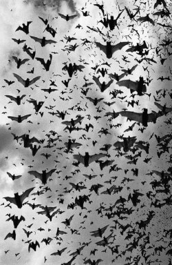 animals Bat Black and White night animal bats Witch evil vampire darkness goth witchcraft nu goth all black dark blog witchy dark beauty gothic beauty gothic blog