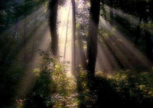 Morning sun rays by halina-anna on Flickr.