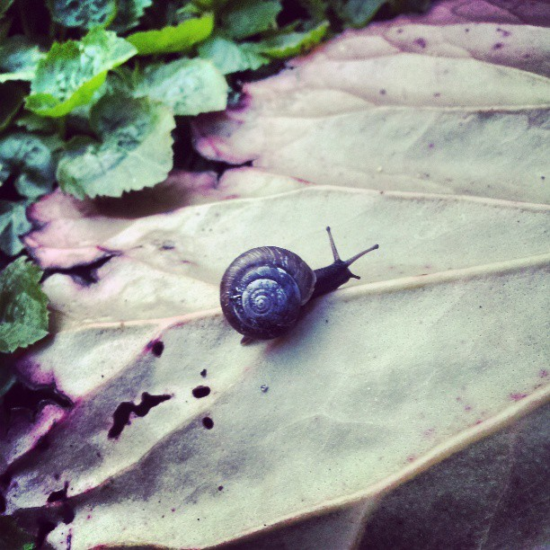 Good evenin mr snail.