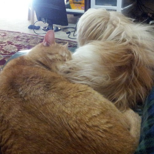 Snugglebuddies.