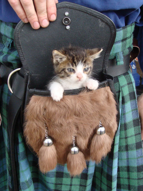 breelandwalker:  changingpelts:  shaboogami:  Onward, my plaid steed…  Real men wear kilts and carry kitten in their kilt pouch thingies.  If you're not reblogging a kitten in a sporran, there's something wrong with you.