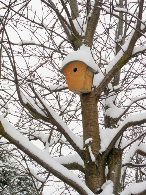 Snow covered Bird Box, Aldridge, Walsall, England