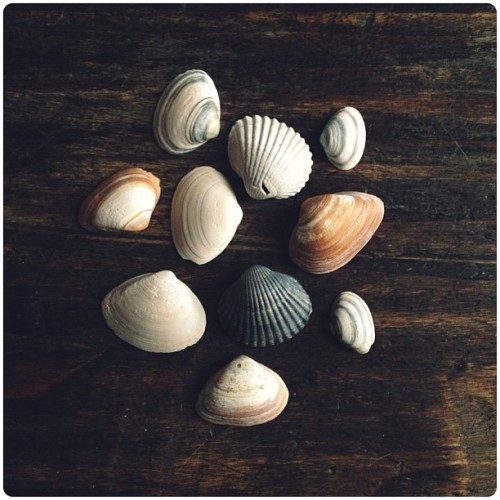 Scheveningen shells (at Gent)