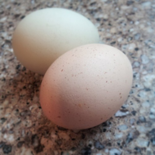 #organic #eggs from my buddy's chicken, has a blueish tint to it. #nofilter