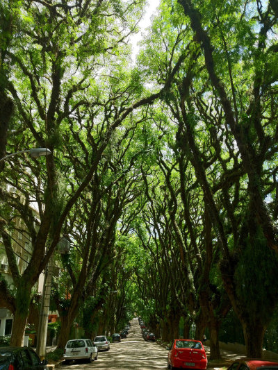 Said to be the most beautiful street in the world - Porto Alegre, Brasil