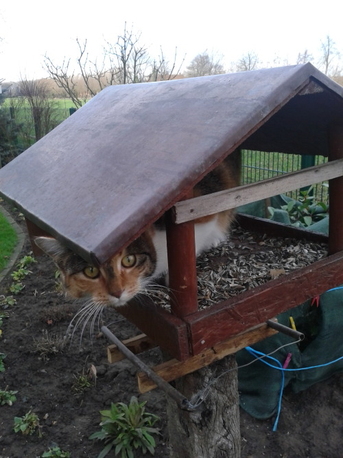 getoutoftherecat:  clever, cat, but i don't think the birds will be fooled. for one thing, i'm standing out here taking a picture of you.