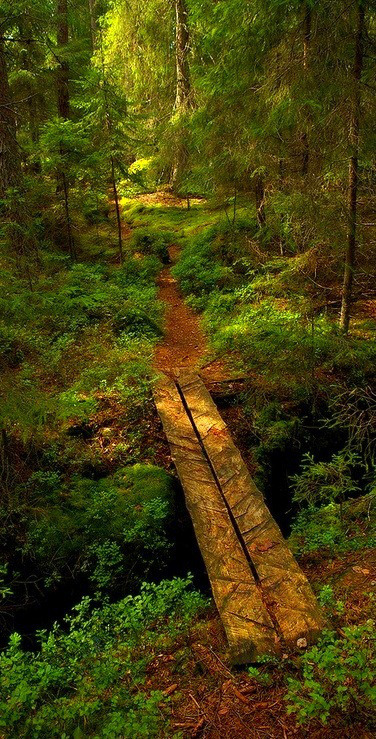 Forest Bridge, Sweden photo via besttravelphotos