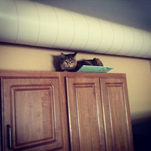 Fat cats can climb, too