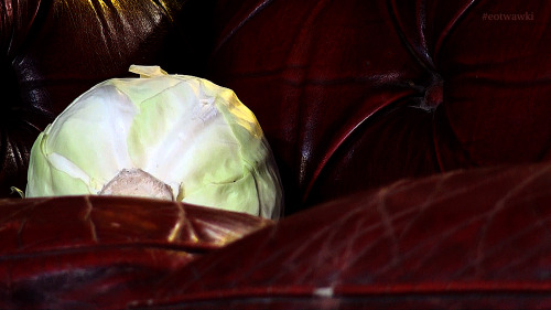postcards from the end of the world2: cabbage#eotwawki