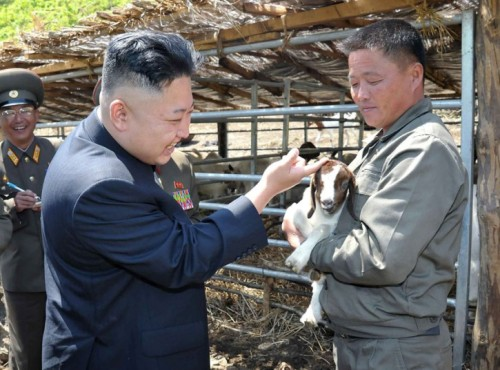 mabelmoments:   North Korean leader Kim Jong un pats a goat on the head as he visits Breeding Station No. 621 of the Korean People's Army. Picture: AP Photo/KCNA via KNS  There's more than one goat in this pic. I kid you not.