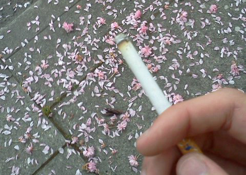 aqualized:  feahr:  radicooler:  I was smoking and I walked past these pretty petals on the ground and thought it would make a lovely photo so I made it one.  ♡pale blog♡       (via TumbleOn)