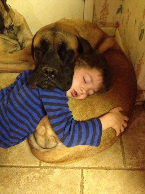 cute-overload:  Each Other's Pillowshttp://cute-overload.tumblr.com  dogs are rad okay