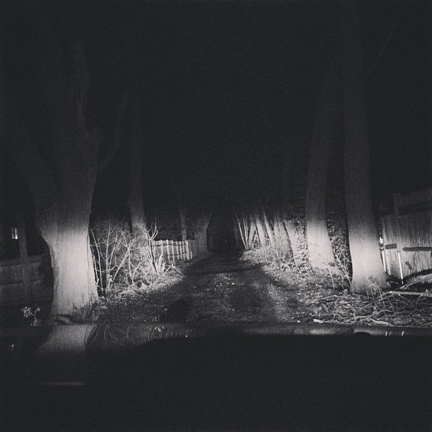 #wtf #creepy #dirtroad #unpaved  #bw #highbeams #night #adventure