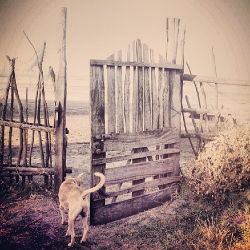 #dog #beach #wooden #gate #dapoli