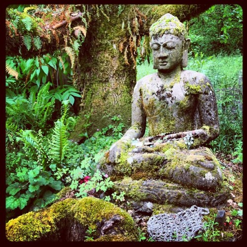 Fair Budda (at Oregon Country Fairgrounds)