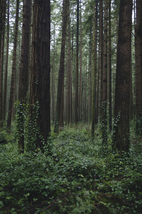 alexstrohl:  The elves live here. Pacific Spirit Regional Park, Vancouver