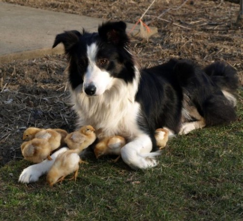LOCAL DOG IS A TOTAL CHICK MAGNETby The Fluffington Post  http://bit.ly/13OhzHZ