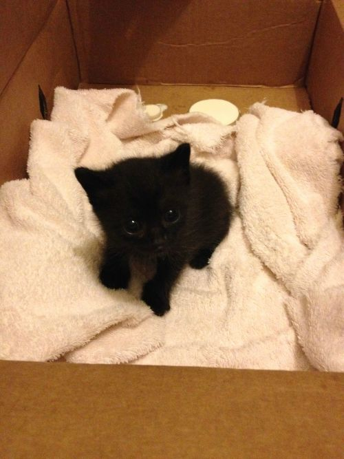 thehumanbutt:  stop-fallen-angel:  awwww-cute:  Found this little guy outside of a Mexican restaurant last night. His name is Queso  THAT THING LOOKS LIKE A DEMON, WHY WOULD YOU NAME HIM AFTER CHEESE?  IT IS OBVIOUSLY A BLACK FLOOF AND HAS/WILL NEVER HURT A SOUL. DID YOU EVEN LOOK AT IT?!???!