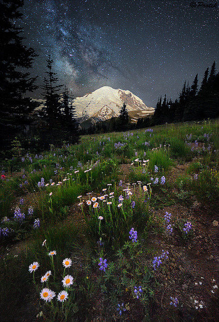 Starry night by protikH on Flickr.