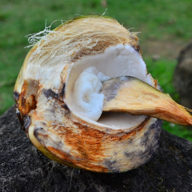 Fresh #coconut #yummy #hawaii #kauai
