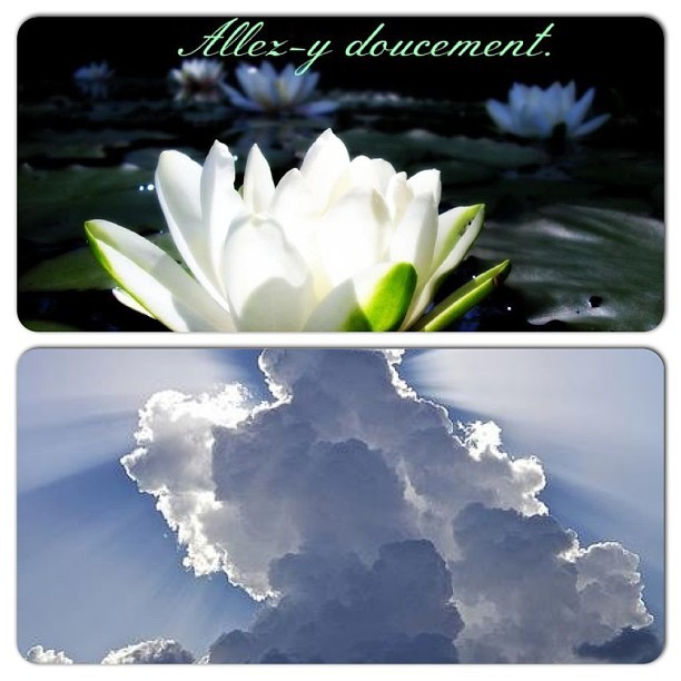 Good Morning… Kitty #instacollage #morning #cloud #flower #word