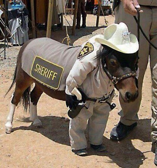 lolzpicx:  Theres a new sheriff in town