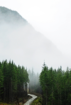 trulyperf:  Into the Mist (by Orbittrap)