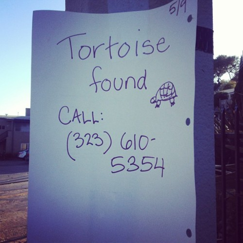 Some good news at last! Although really want to ring up for this #tortoise
