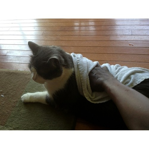 #Cats are not excluded in the fuzzy family cool off.  (at Fuzzy Family)