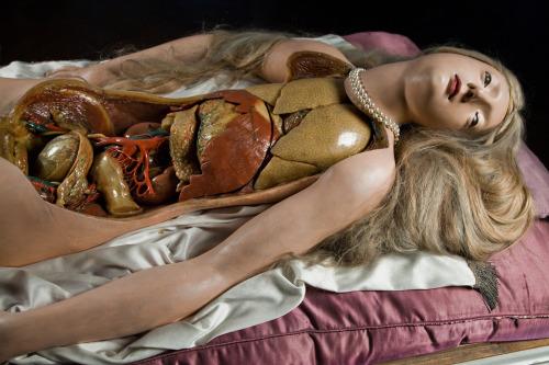 subdivisionoftheaesthetic:  Baroque Period Anatomical Wax Model Venerina - Anatomical Venus 1780-1782 Marie Marguerite Bihéron Anatomical Eve - 16-17th Century Anatomical Venus - 19th c. Wax
