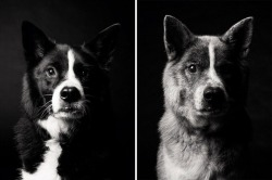 photography animals cute puppies dogs pets amanda jones