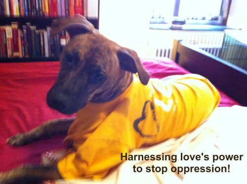 Seminary Dog Stands Lounges on the Side of Love. (www.standingonthesideoflove.org)     ***Just to be clear, Seminary Dog is not officially affiliated with Standing on the Side of Love. Just a fan.