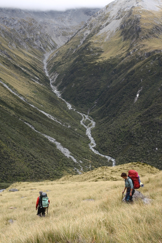 4nimalparty:  descending tussock (by go wild - NZ outside)