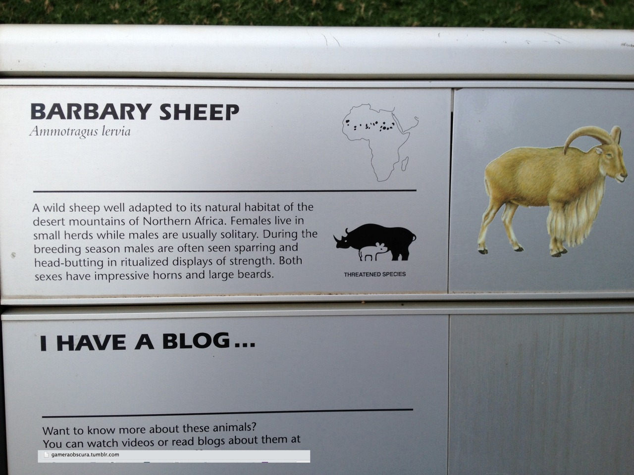 cool sign i saw at the zoo today those sheep are dope