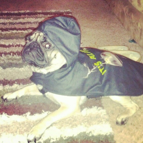 Bad Ass Pug! Also happy easter  #coolpug #happyeaster