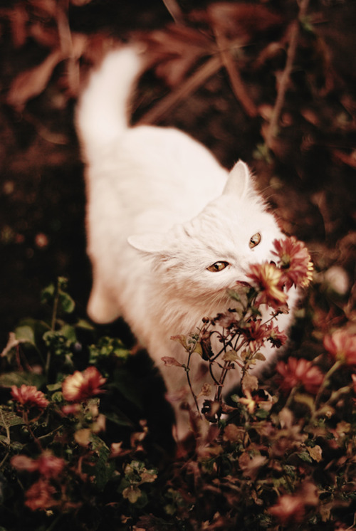 thesamemistakesxx:  cat | Tumblr on We Heart It. http://weheartit.com/entry/54797685/via/_itsOrsalia