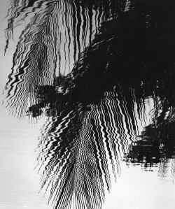 gacougnol:  Brett Weston Reflections, Hawaii 1978