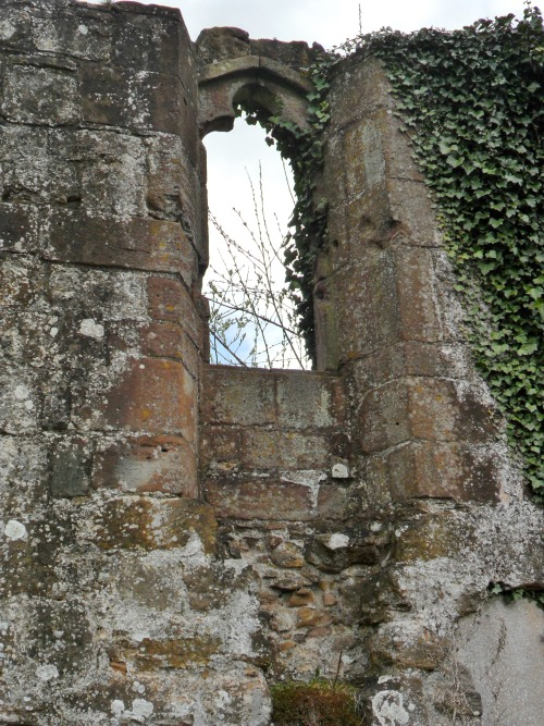 Ivy overgrown window in the ruins of Lilleshall Abbey, Shropshire, England. All Original Photography by http://vwcampervan-aldridge.tumblr.com
