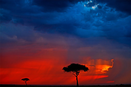 My Africa 48 by Catman Suha