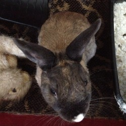 #bunny and his #female companion aka his stuffed rabbit 🐰