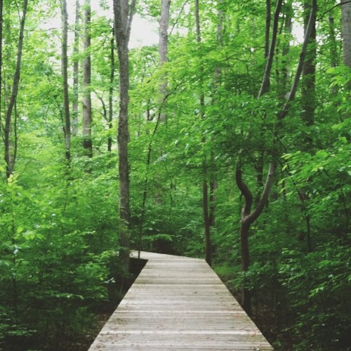 it's saturday … take a walk  (at Hemlock Bluffs Nature Preserve)
