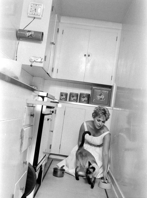 Kim Novak feeding one of the cats who played Pyewacket in Bell, Book and Candle, 1958  Photograph by Eliot Elisofon (via snowce)