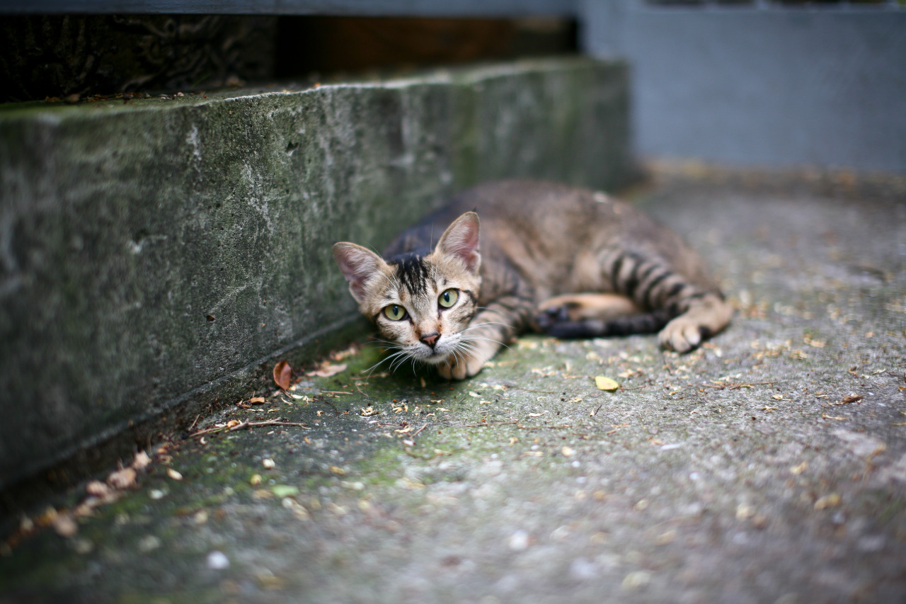 A kitteh on the streets of Hong Kong. Sorry I woke you from your nap.
