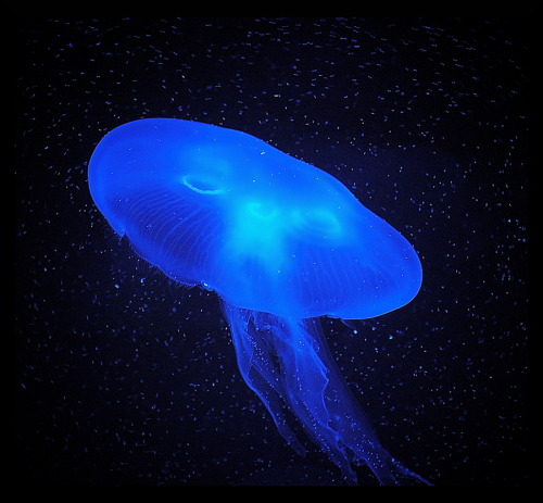 Jellyfish by Sonja Probst.