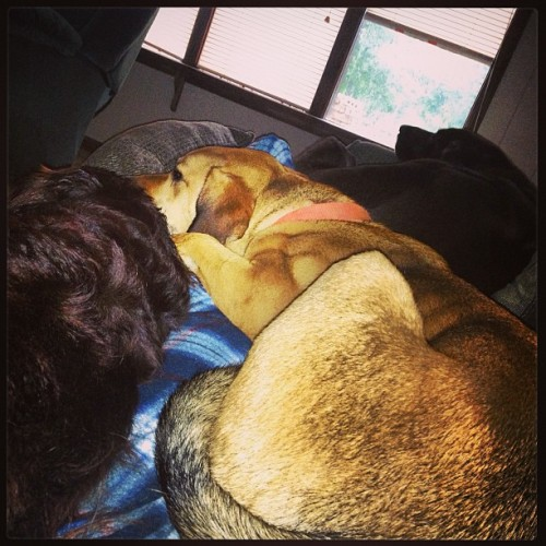 My lap. #rescuedogs  (at Rolling Acres)