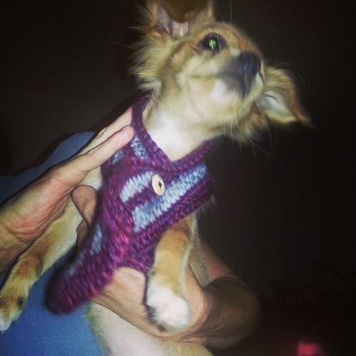 Lilo got her scarf!!