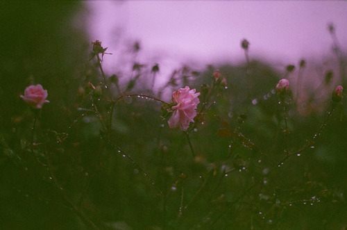 rxtna:  lomoPotato | via Tumblr on @weheartit.com - http://whrt.it/18NfpYR