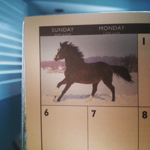 Got myself a horsey day calendar mostly for writing myself love notes. #dim-dom my first #Mayfair